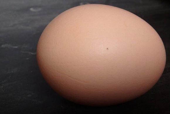 Absage an Geschlechtsbestimmung im Ei