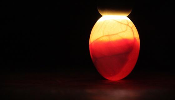 Durchleuchtetes Ei