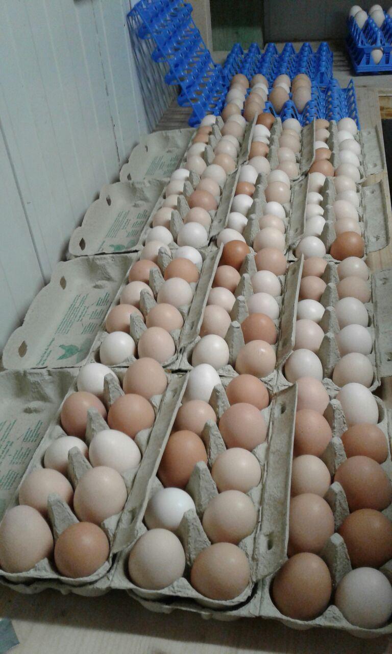 Jedes Ei ein kleines Meisterwerk